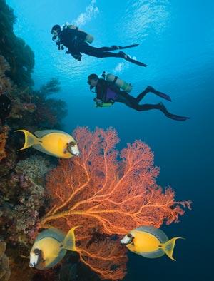 Local Diving – 2